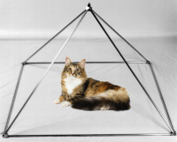 Cat in a pyramid